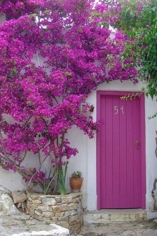 Eclectic Front Door with Brighter Blooms Barbara Karst Bougainvillea