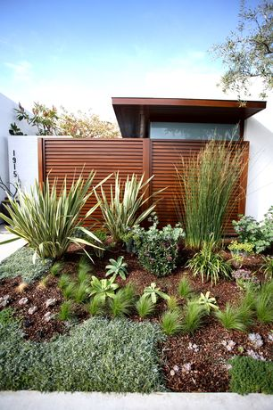 Contemporary Landscape/Yard with Variegated New Zealand Flax - Phormium Tenaxx, exterior stone floors, Fence, Pathway
