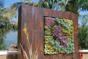Modern Landscape/Yard with Raised beds, Custom Succulent Wall, Jada Point Echeveria Japanese Purple Succlent