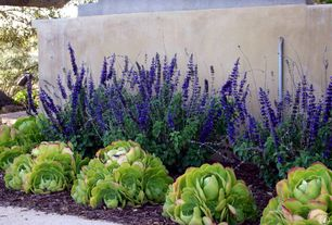 Traditional Landscape/Yard with DIY How to Form Concrete Walls, Fence, Salvia May Night