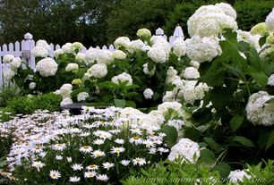 Country Landscape/Yard with Flower muse white hydrangea, Flower muse white hydrangea, White picket fence