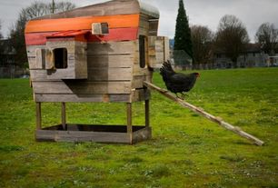 Eclectic Landscape/Yard with Chicken coop, Jersey Giant Hen, Fence