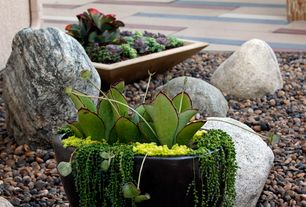 Modern Landscape/Yard with River pebble, Venus fly trap and sedums, Planter