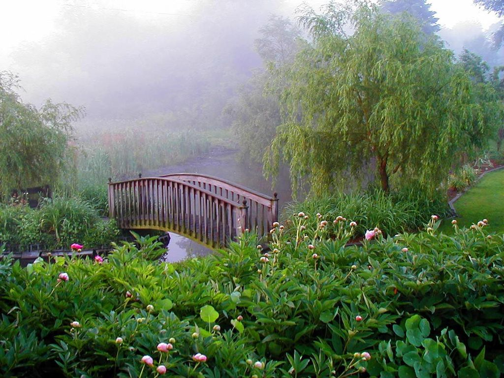 Traditional Landscape/Yard with Wood bridge, Weeping willow, Rosehip