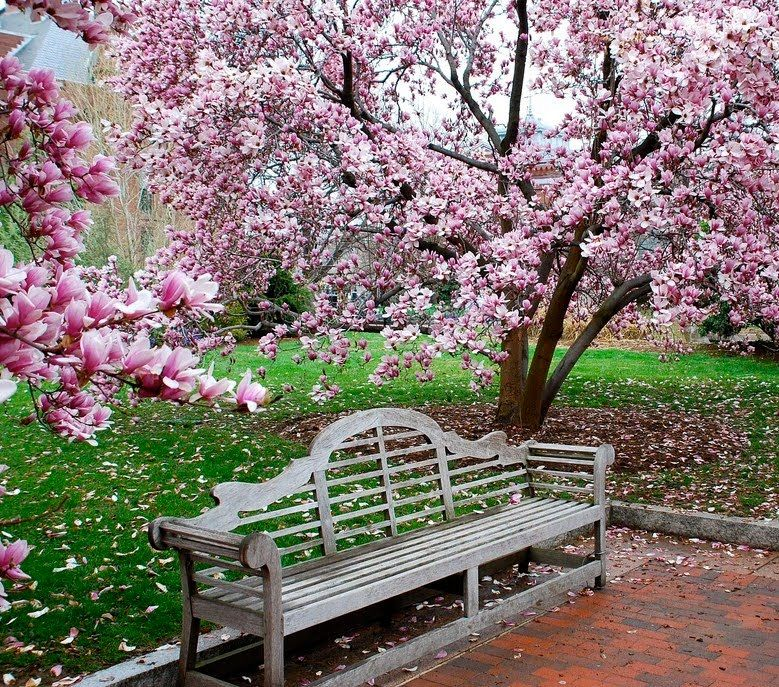 "Traditional Landscape/Yard with picture window, Anderson teak marlborough two seater 66""w teak garden bench"