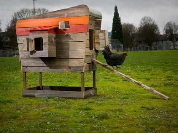 Eclectic Landscape/Yard with Paint 1, Chicken coop, Paint 2