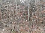 0 Crows Run Rd, North Sewickley Township, PA