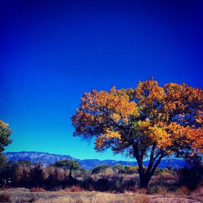 3619 Calle Montosa Ct NW, Albuquerque, NM 87120