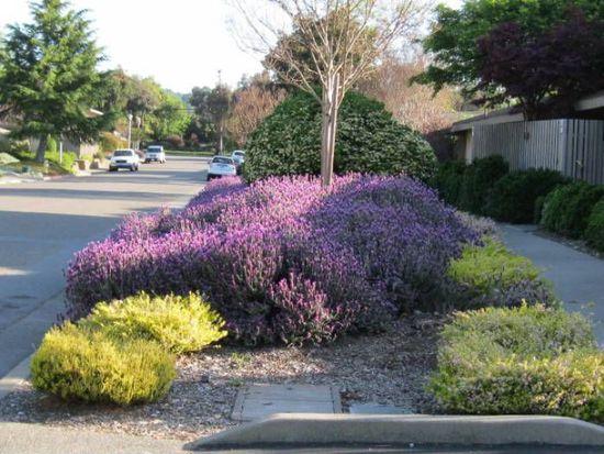 257 Roundtree Way, San Rafael, CA 94903