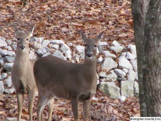 284 Chestnut Oak Ln, Remlap, AL 35133