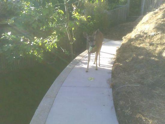 746 Prairie Creek Dr, Pacifica, CA 94044