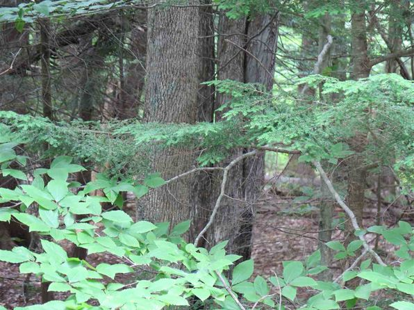 null bed null bath Vacant Land at M1 L49 S2 Sleeper Rd Hillsborough, NH, 03244 is for sale at 20k - 1 of 4