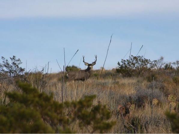 null bed null bath Vacant Land at  Herman St Terlingua, TX, 79852 is for sale at 7k - 1 of 11